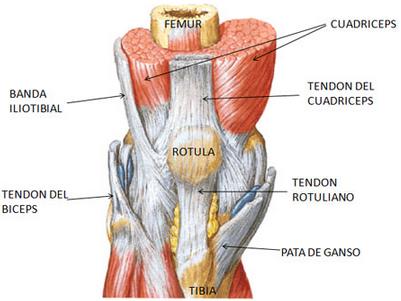 lesion-rodilla-fisioterapeuta-angel-araque