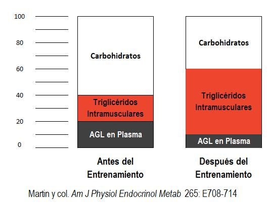 carbohidratos-antes-despues-entrenar