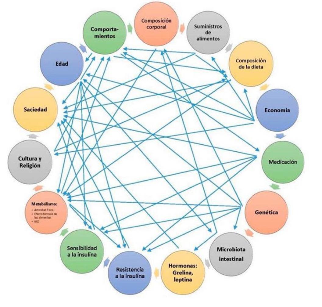 factores-obesidad-grafico